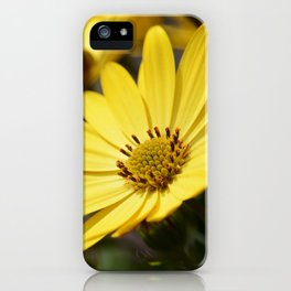 Yellow African daisy iPhone Case