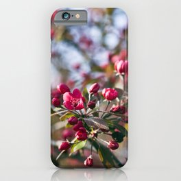 RED APPLE BLOSSOMS iPhone Case