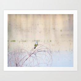 """Pretty Kingbird"" by Murray Bolesta Art Print"