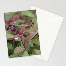 Bush Stationery Cards