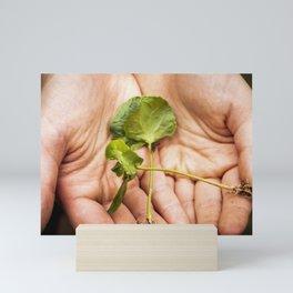 coffee seedlings Mini Art Print