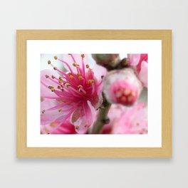 Cocktail Tree Flowers Framed Art Print
