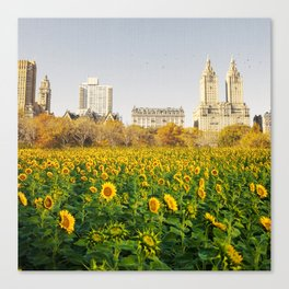Central Park Sunflower Field Collage Canvas Print