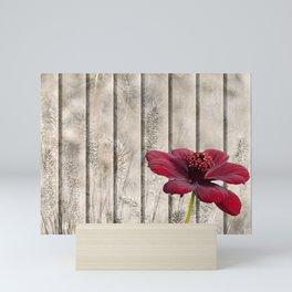 Shabby Chic Style Red Chocolate Flower Cosmos Atrosanguineus Mini Art Print