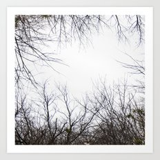 Tree Limbs Art Print