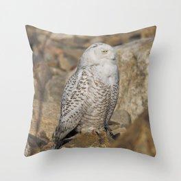 Snowy Owl on the Rocks Throw Pillow