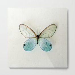 Blue Gold Glasswing Metal Print