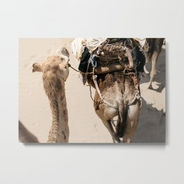 Tales of Morocco | travel - camel - yellow - africa - desert - print - photo - outdoor - landscape Metal Print