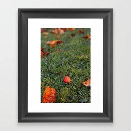 Autumn crab apple Framed Art Print