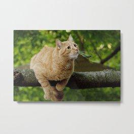 Photograph of a Cat hanging on a Limb Metal Print