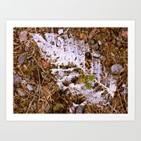 The feather of the phoenix. Art Print