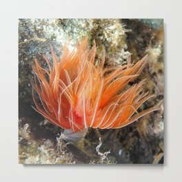 Orange spirograph sailor background | Fond Marin spirographe Metal Print