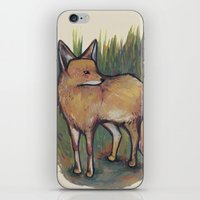 coyote iPhone & iPod Skins featuring Coyote by Kelsey Oseid