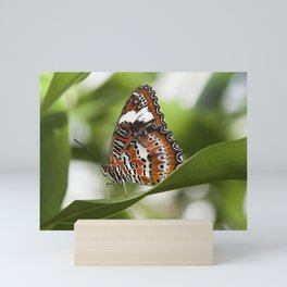 Orange Lacewing BUTTERFLY Mini Art Print