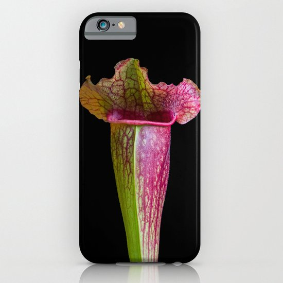 Sarracenia (American pitcher plant) iPhone & iPod Case