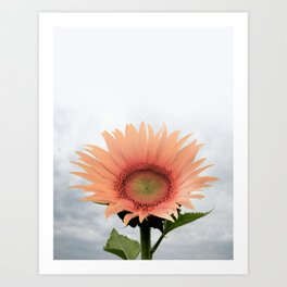 #sunflower Art Print