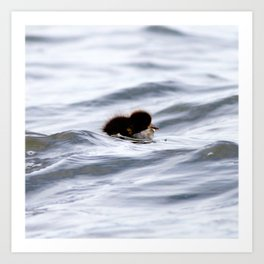 Watercolor Bird, Tufted Duck 03, Lake Myvatn, Iceland, The Smallest Duckling Art Print