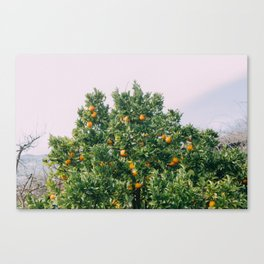 Oranges for Days Canvas Print