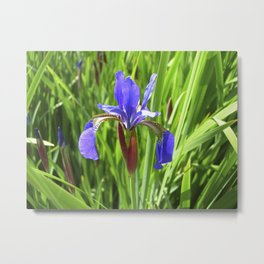 blue summer iris VI Metal Print