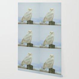 Snowy Owl Wallpaper