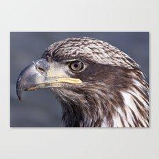 Portrait of an Immature Bald Eagle Canvas Print