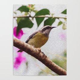 Bird - Photography Paper Effect 008 Poster