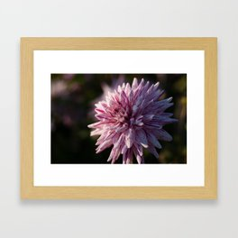 Colors in Autumn  Framed Art Print