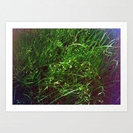 Damaged Disposable Camera Film - Grass Art Print