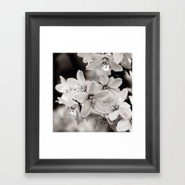 Little Whites ~ No.2 Framed Art Print