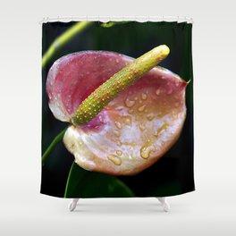 Flamingo Fower,Anthurium Flower. Shower Curtain