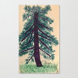 Tsuga Canadensis Canvas Print