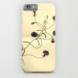 Flower 1499 lobelia speculum Looking glass Lobelia10 iPhone Case