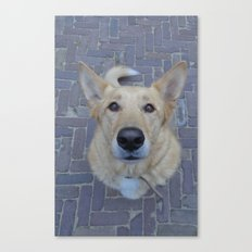 Treat? Canvas Print