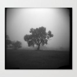 Tree in Field of Fog Canvas Print