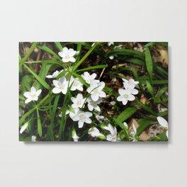 Spring Beauty 08 Metal Print