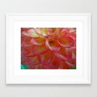 dahlia Framed Art Prints featuring Dahlia  by Lena Photo Art