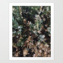 Browning Bush Art Print