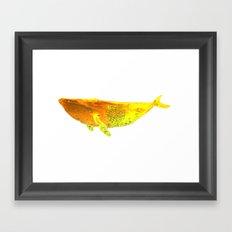 Whale 2 Framed Art Print