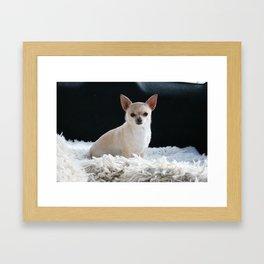 Blond Chihuahua Framed Art Print
