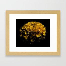 Beautiful Yellow Flower Framed Art Print