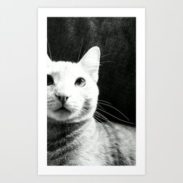 BEAKS. Art Print