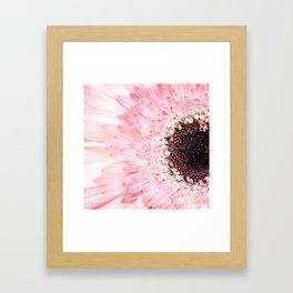 Pale Pink Gerbera Daisy Framed Art Print
