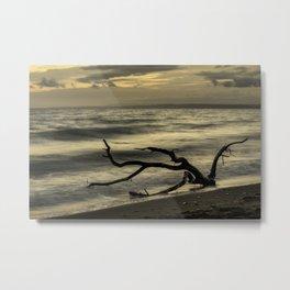 Driftwood on New Quay beach Metal Print