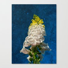 White Foxglove flowers on texture Canvas Print