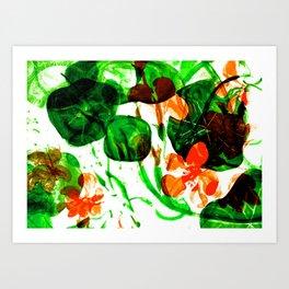 Indian Cress (vivid mix) Art Print