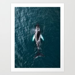 Humpback Whale in Iceland - Wildlife Photography Art Print