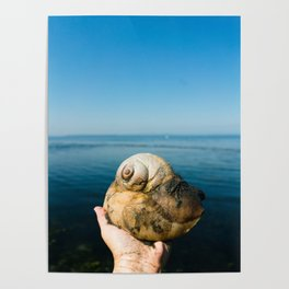 Moon Snail Poster