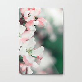 Almond Bloom 7 Metal Print