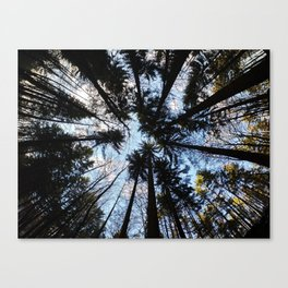 Looking up the Sky Canvas Print