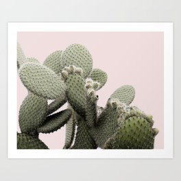 PLANT ON PINK CACTUS Art Print